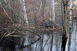 beaver lodge 2