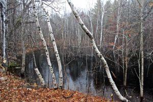 beaver pond 1