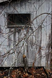beaver shed