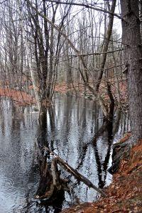 beaver stream width