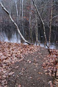 beaver trail 2