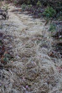 grassy trail