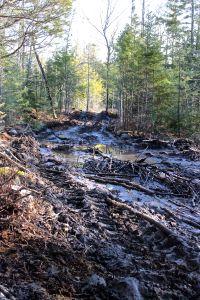 muddy logging road