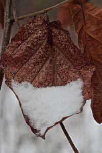 snow on w. h.