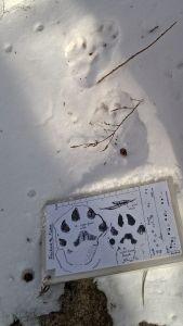 fisher tracks 2