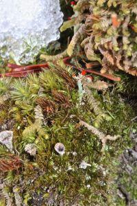 lichens et al