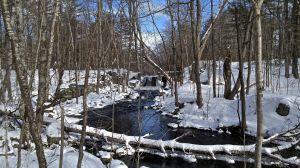 Mill Brook