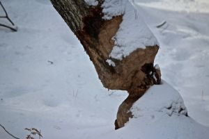 older beaver work