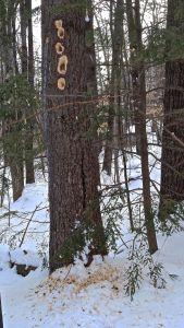 Pil tree