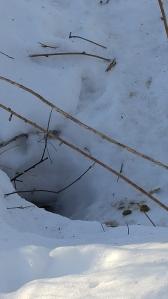 porcupine den
