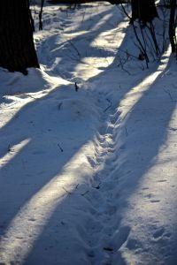 porcupine tracks 1