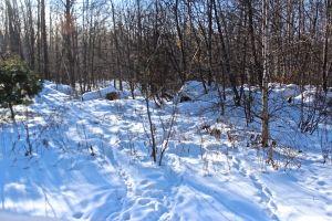 porky paths stump dump