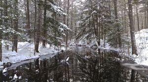 Pudding Pond brook