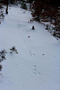 sshare tracks