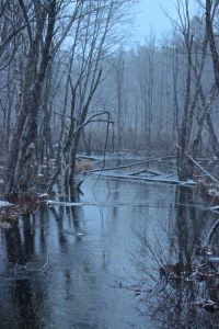 Stevens Brook