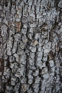 white oak layers
