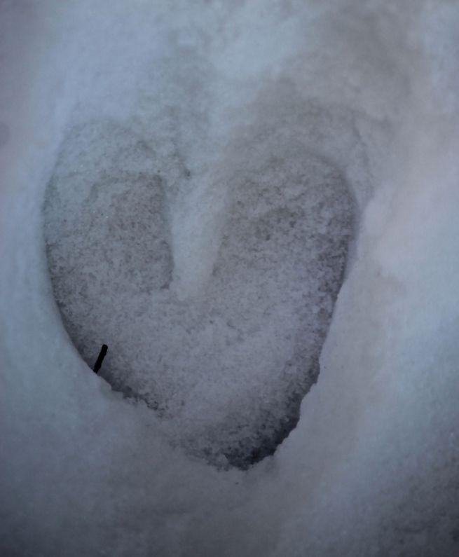 b-deer heart 2