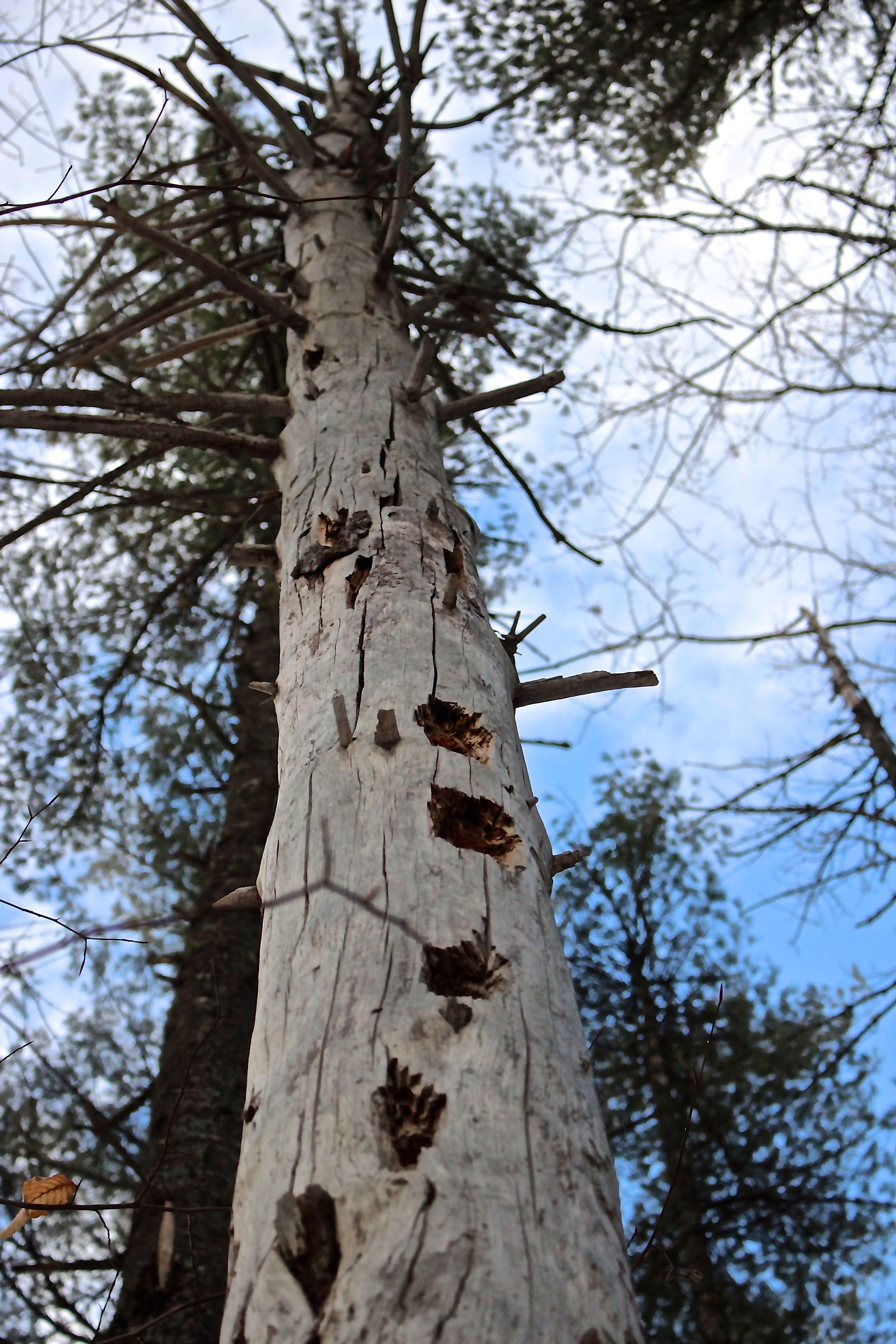 b-woody tree 2