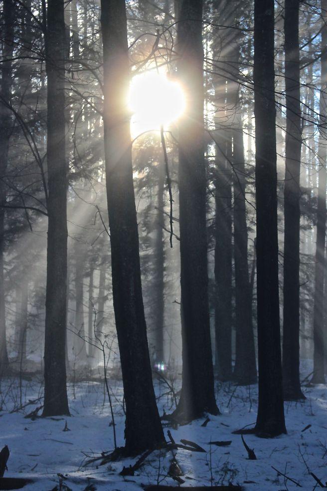 f-sun rays 2