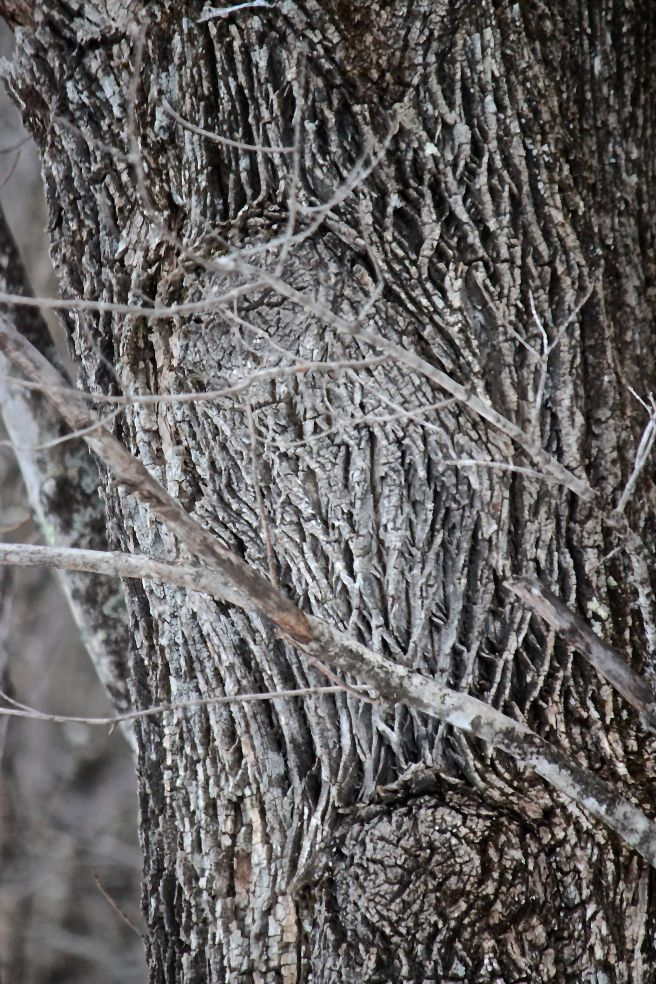 h-tree owl 2