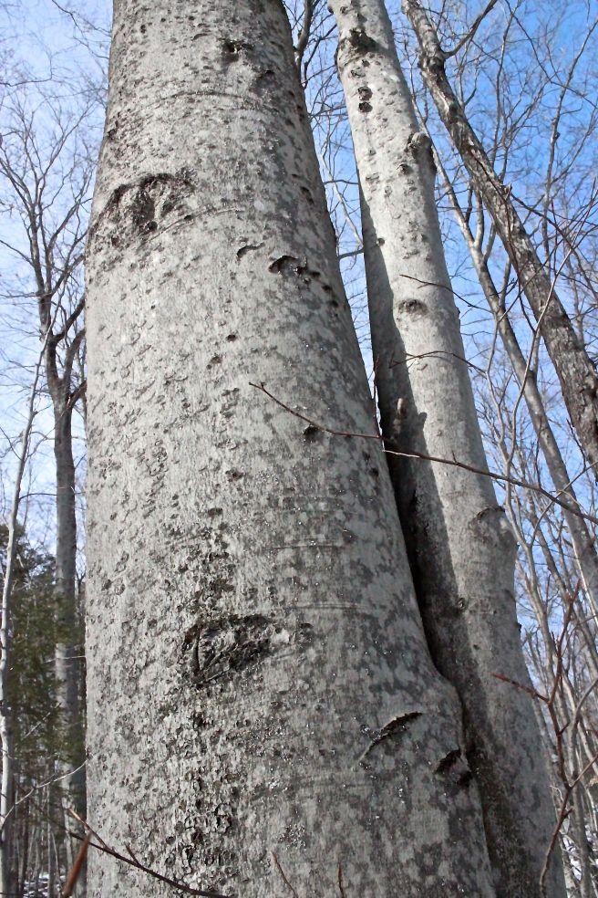 l-bear tree 2