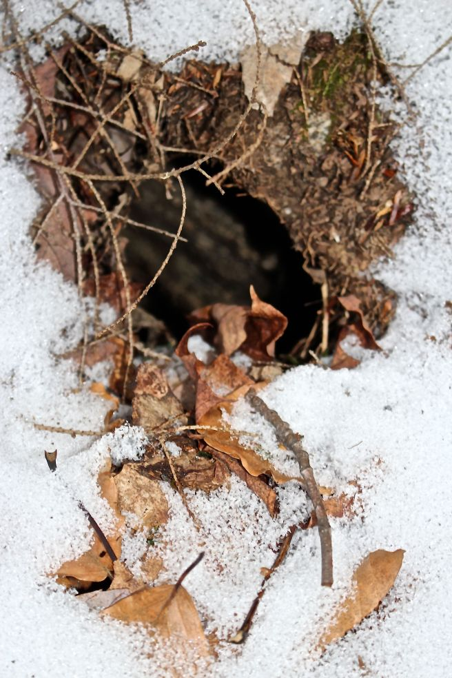 l-squirrel hole1
