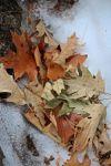 ledges green leaves