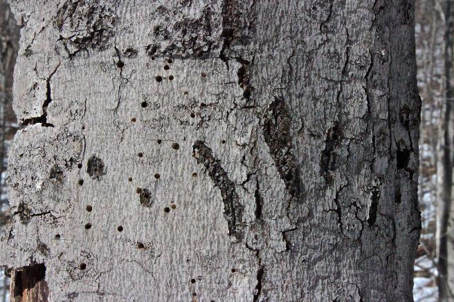 m-bear claw marks.jpg
