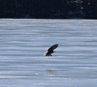 m-eagle 2