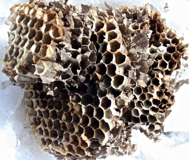 m-hornets nest