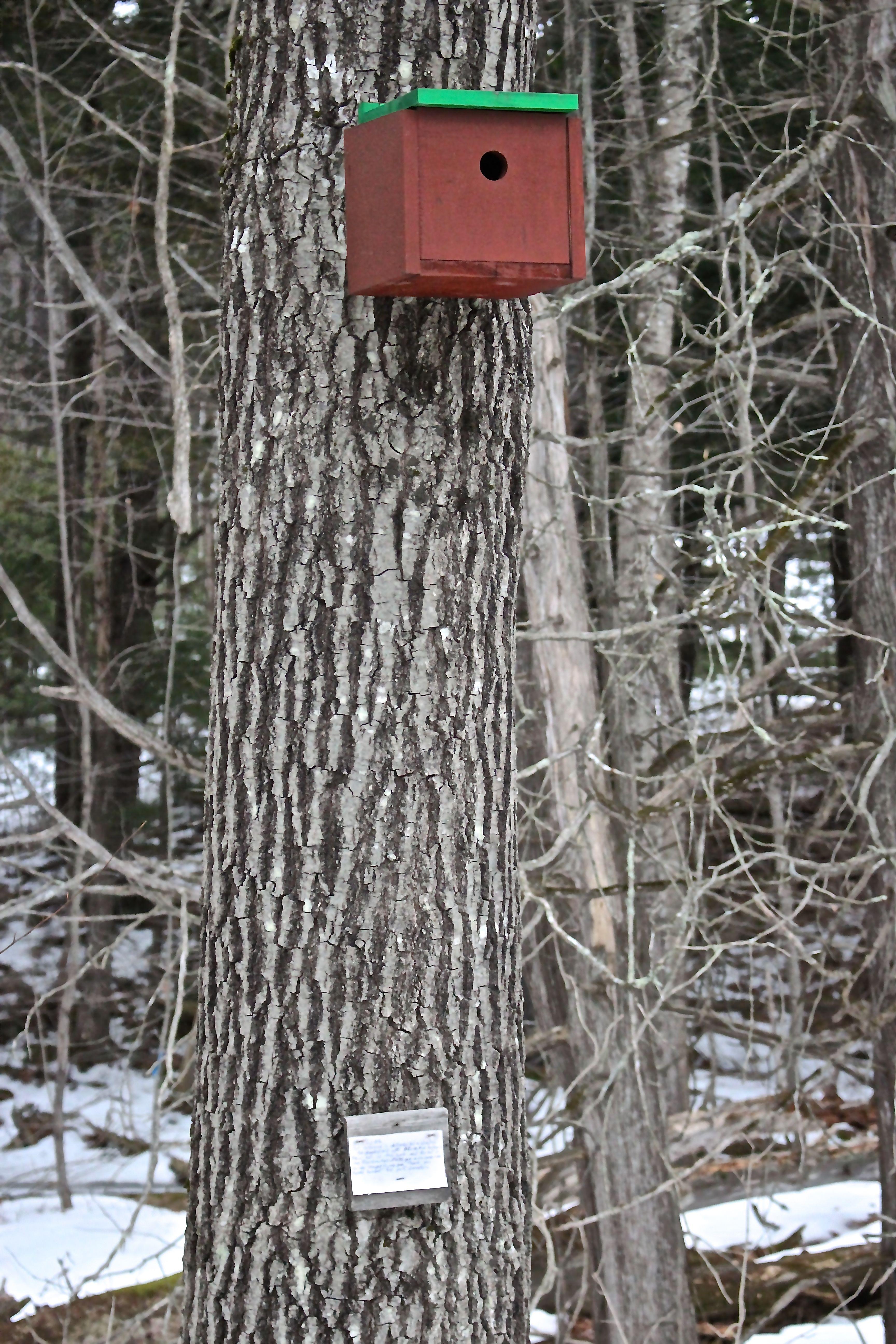 r-birdhouse