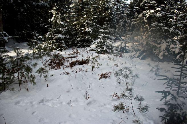 w-snowdust