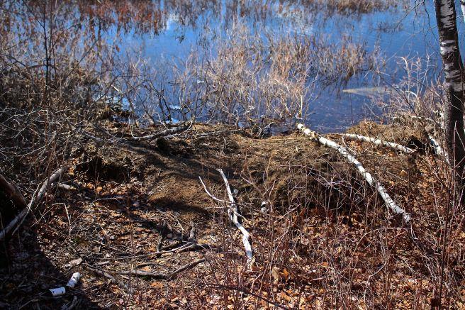 b-beaver scent mound