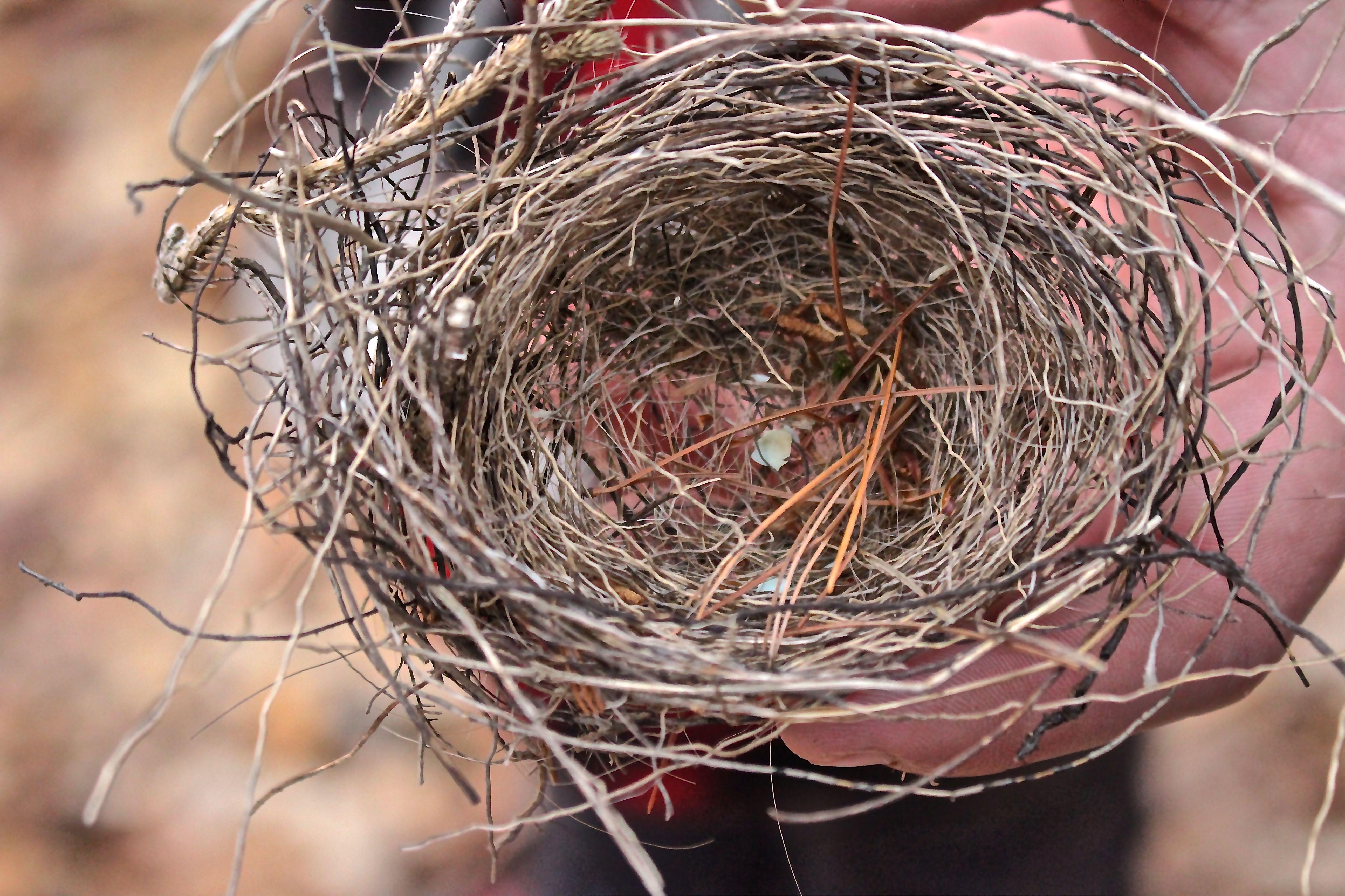 b-bird nest 1