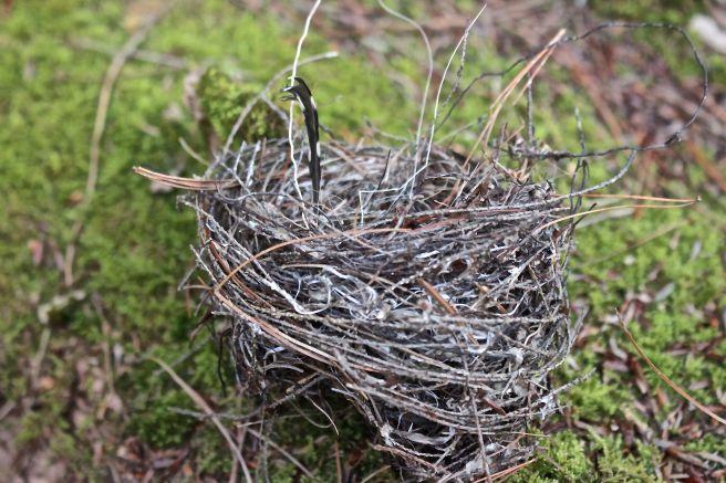 b-nest 2, downy feather