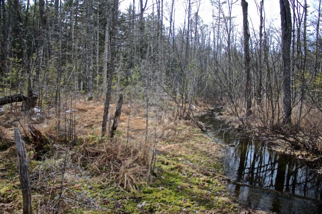 b-wetland 1