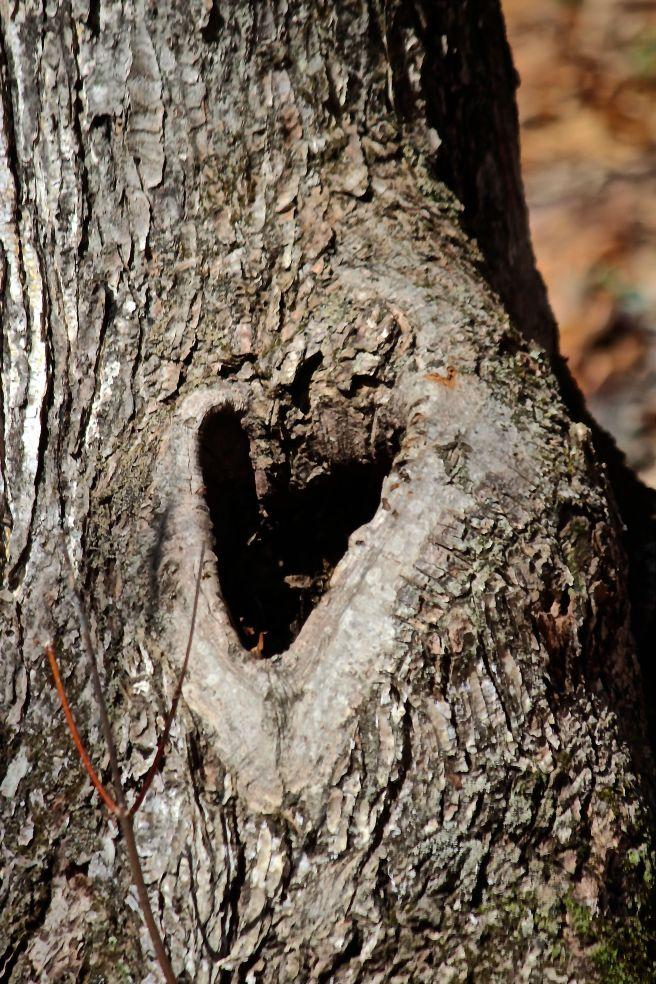 h-amos heart