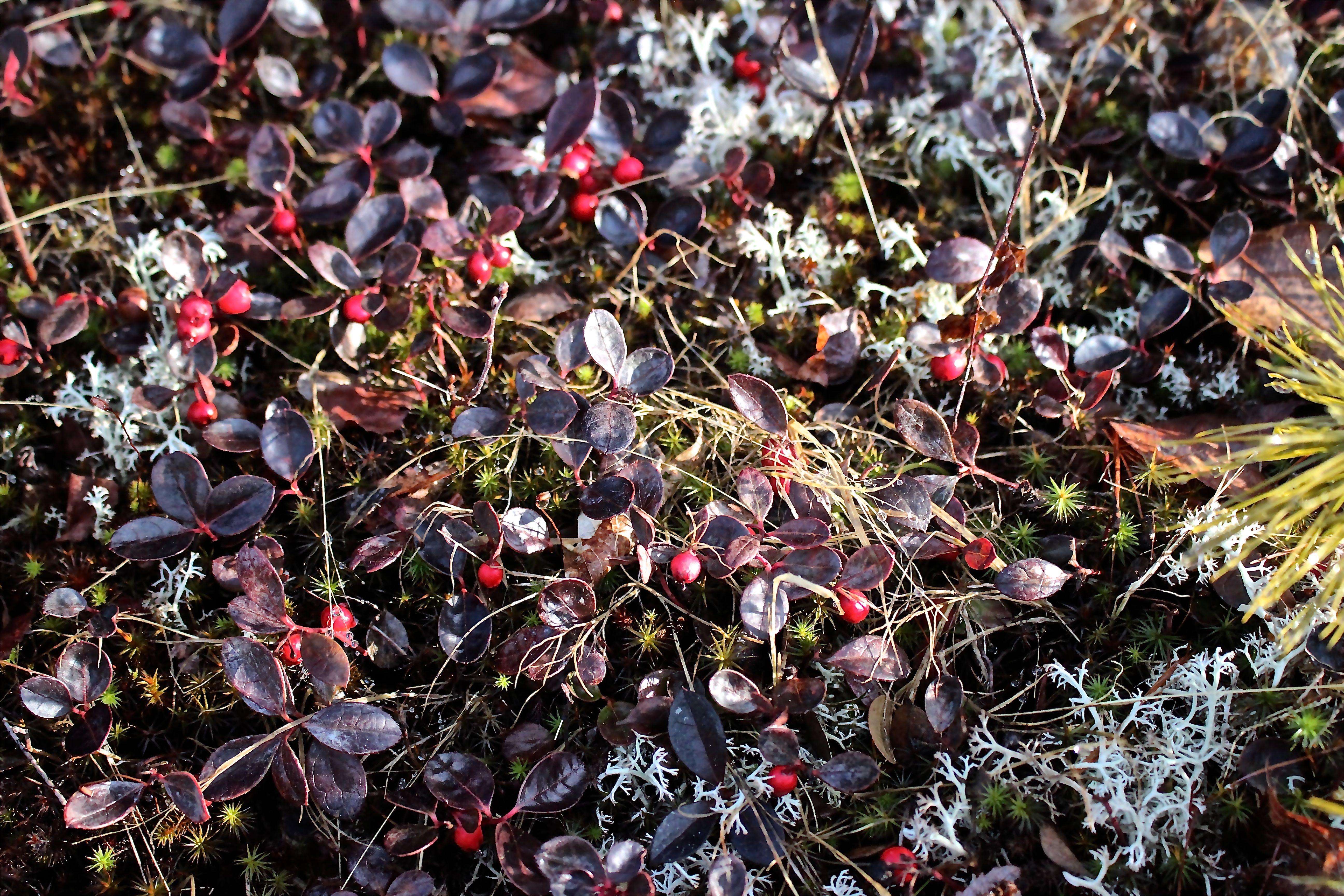 m-berries