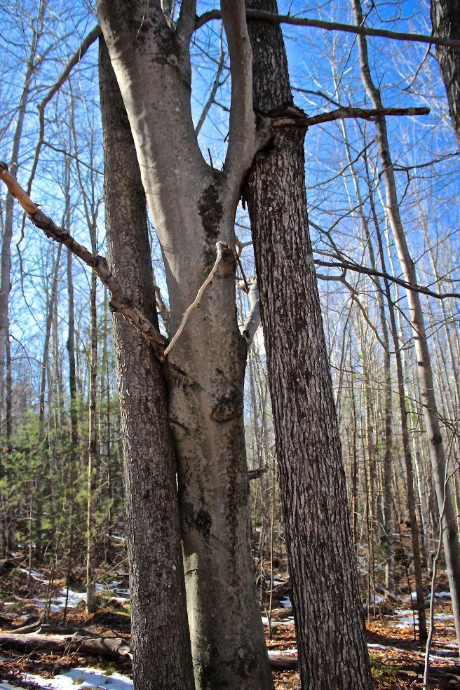 s-3 trees