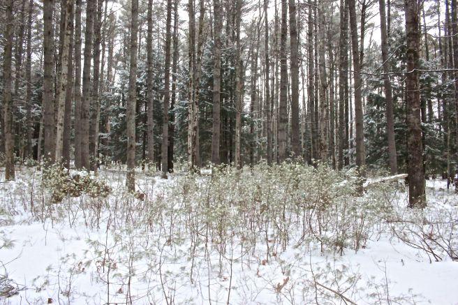 s-snow 1