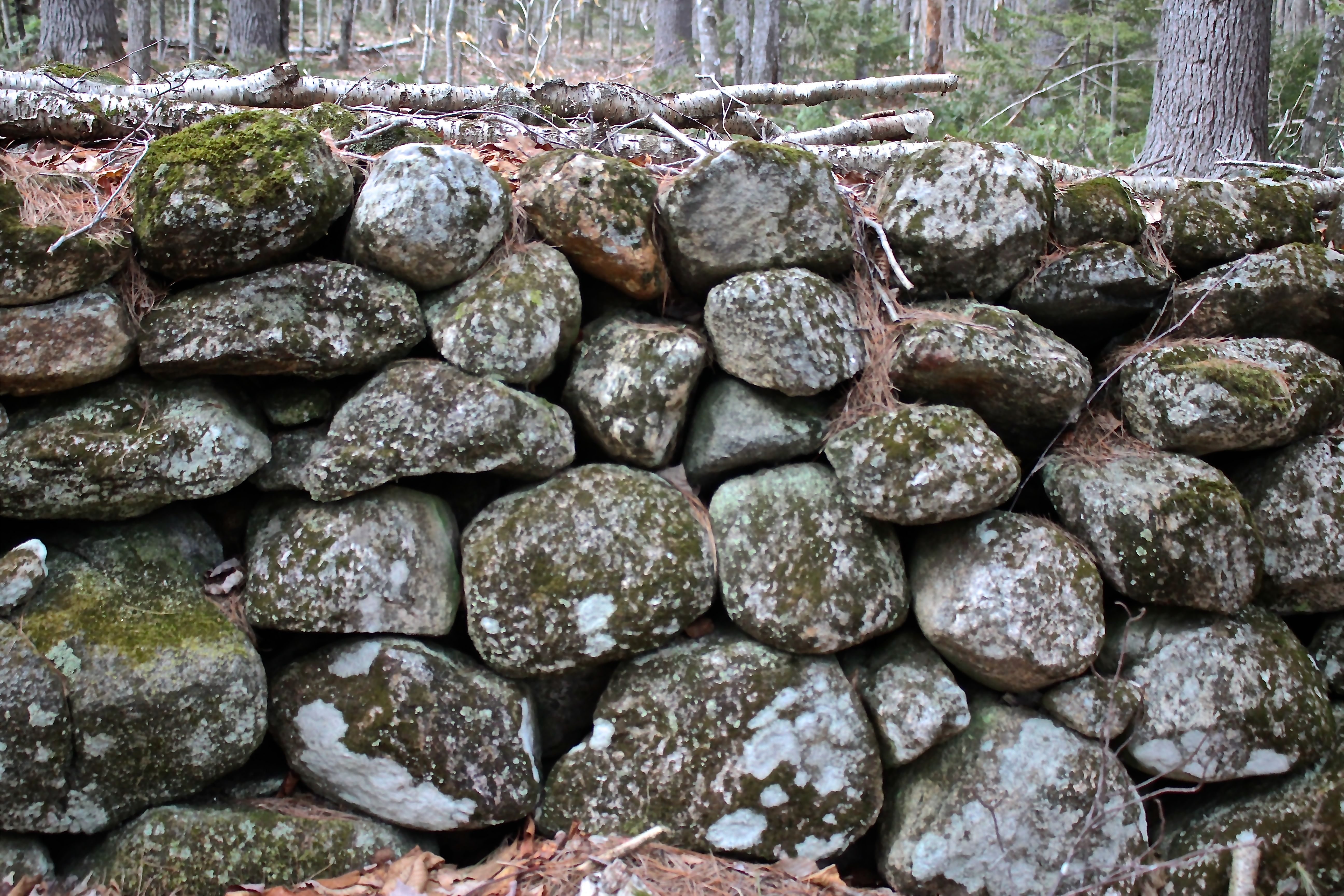 h-stone wall 2, turtle