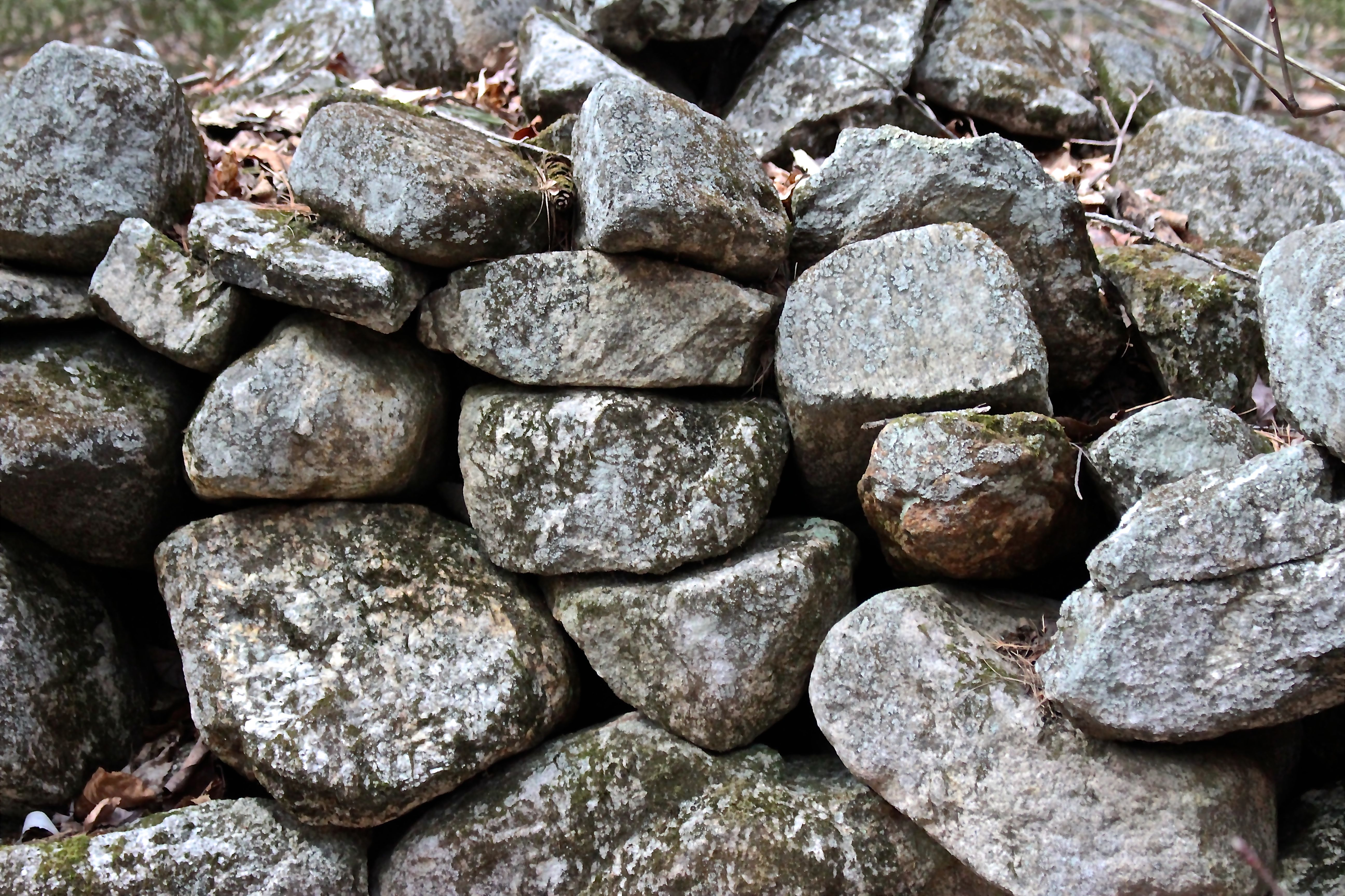 h-stone wall turtle