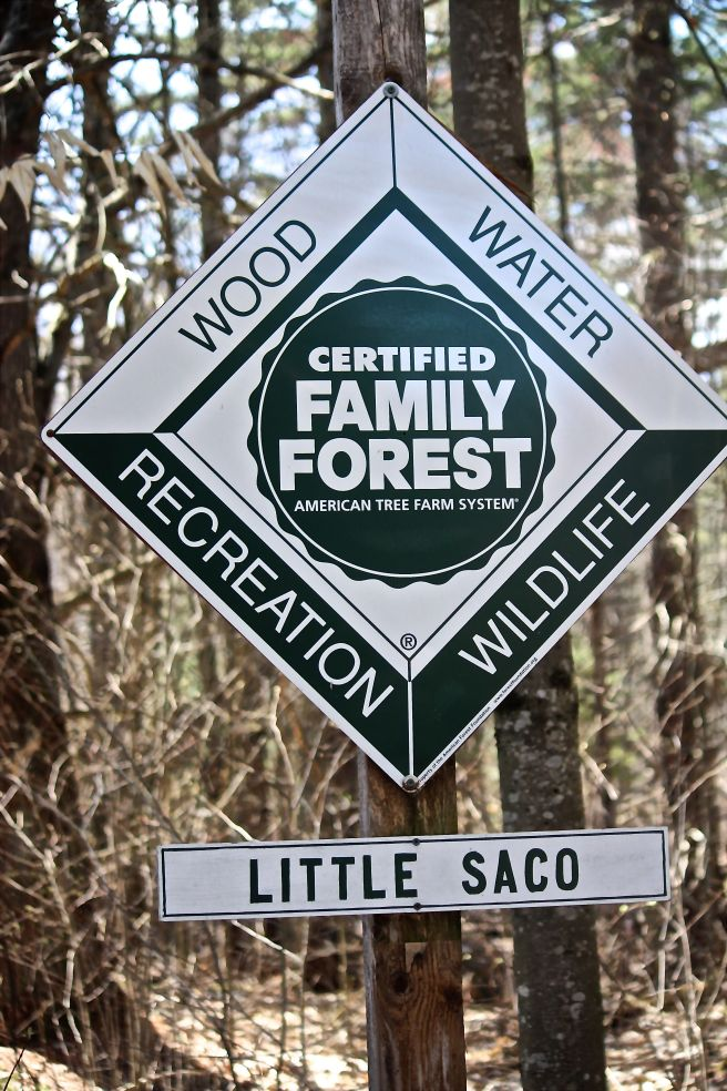 p-little saco sign