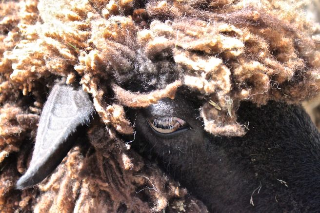 s-sheepish look