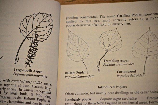 t-leaves