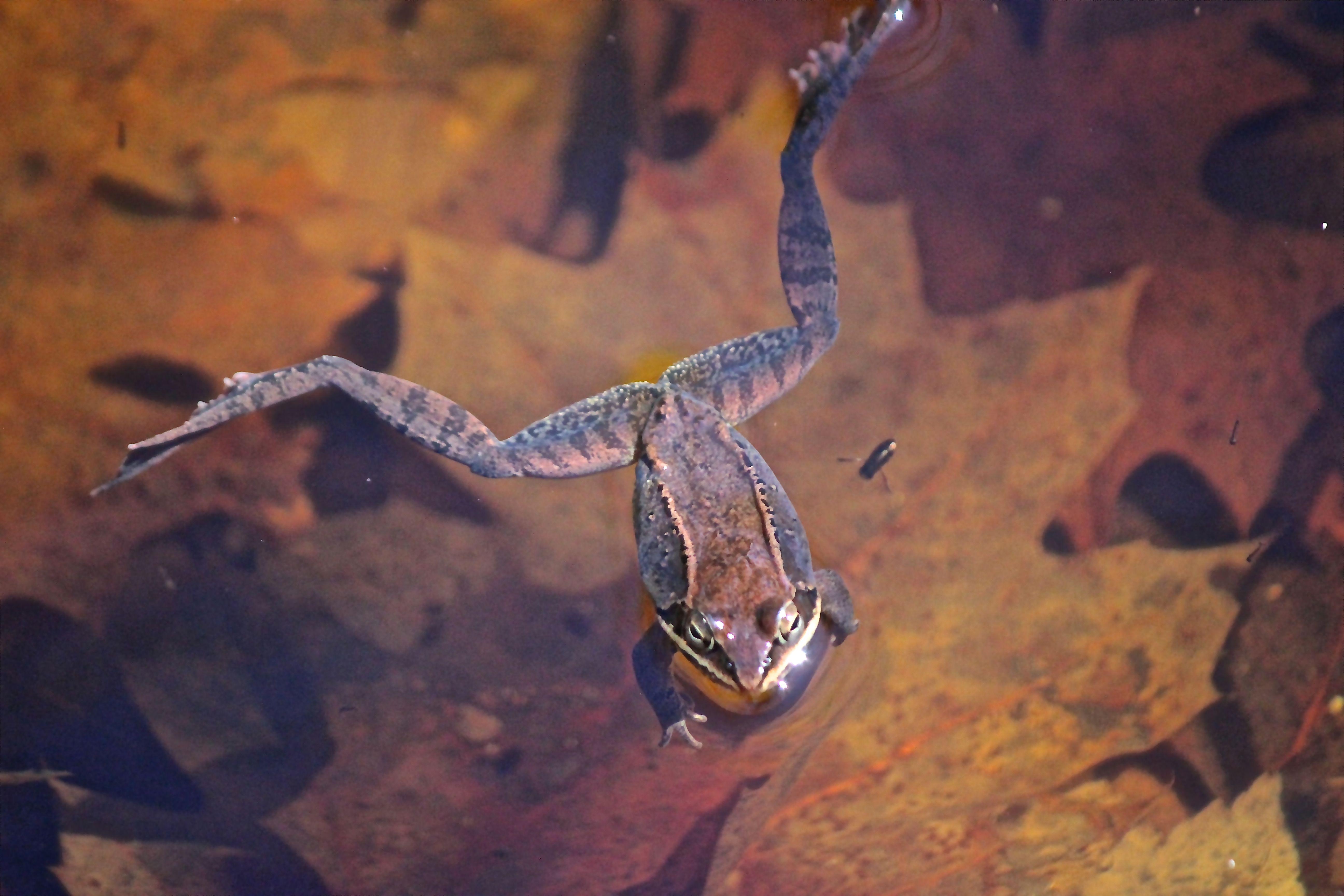 v-frog 5