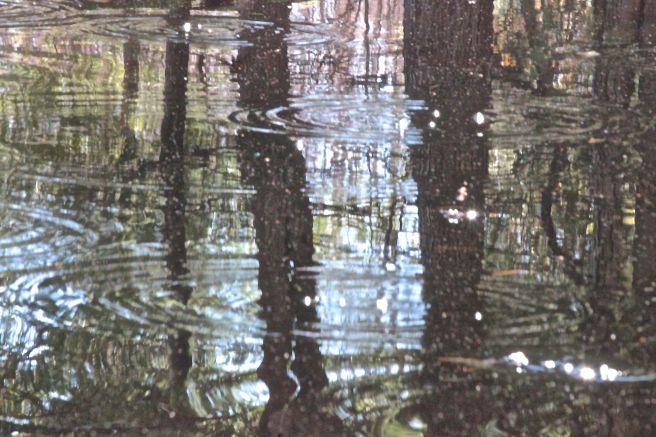 v-ripples