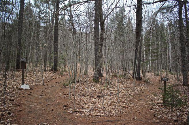 w-2 trails