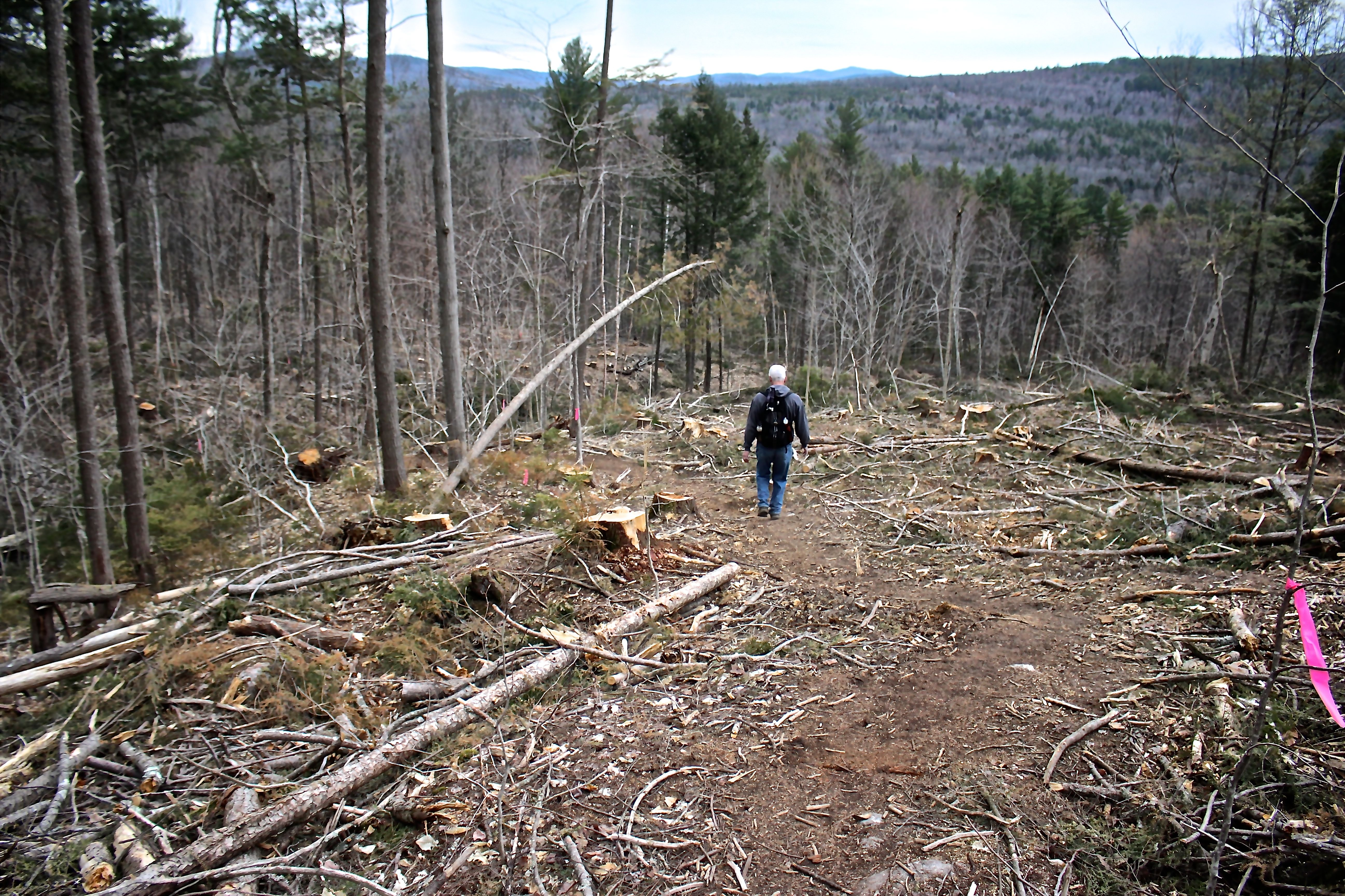 w-s-logging