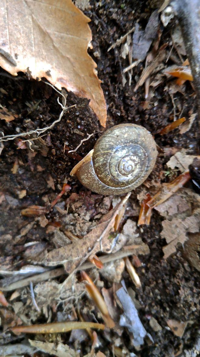 a-snail, ph